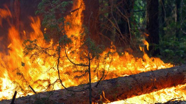 В Башкирии за выходные произошло 4 лесных пожара