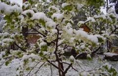 деревья-под-снегом