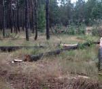 лес-567x400