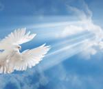nebo-golub-ptica-luchi