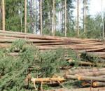 vyrubka-lesa-733x440